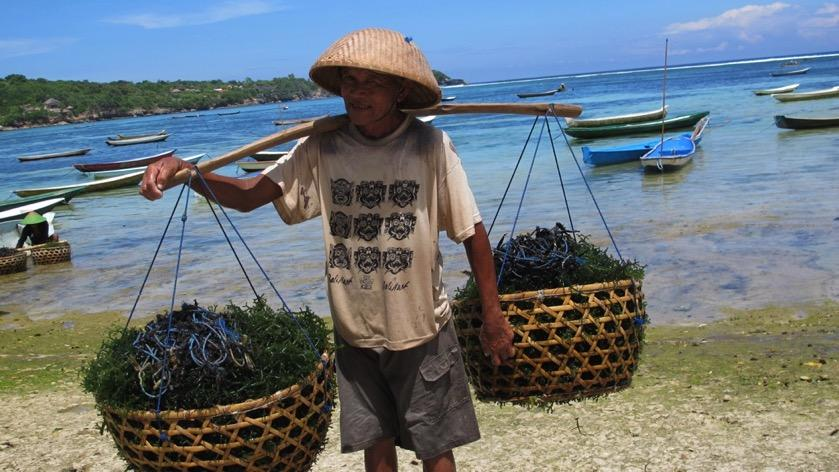 Seaweed aquaculture: an innovation platform for the Blue Economy
