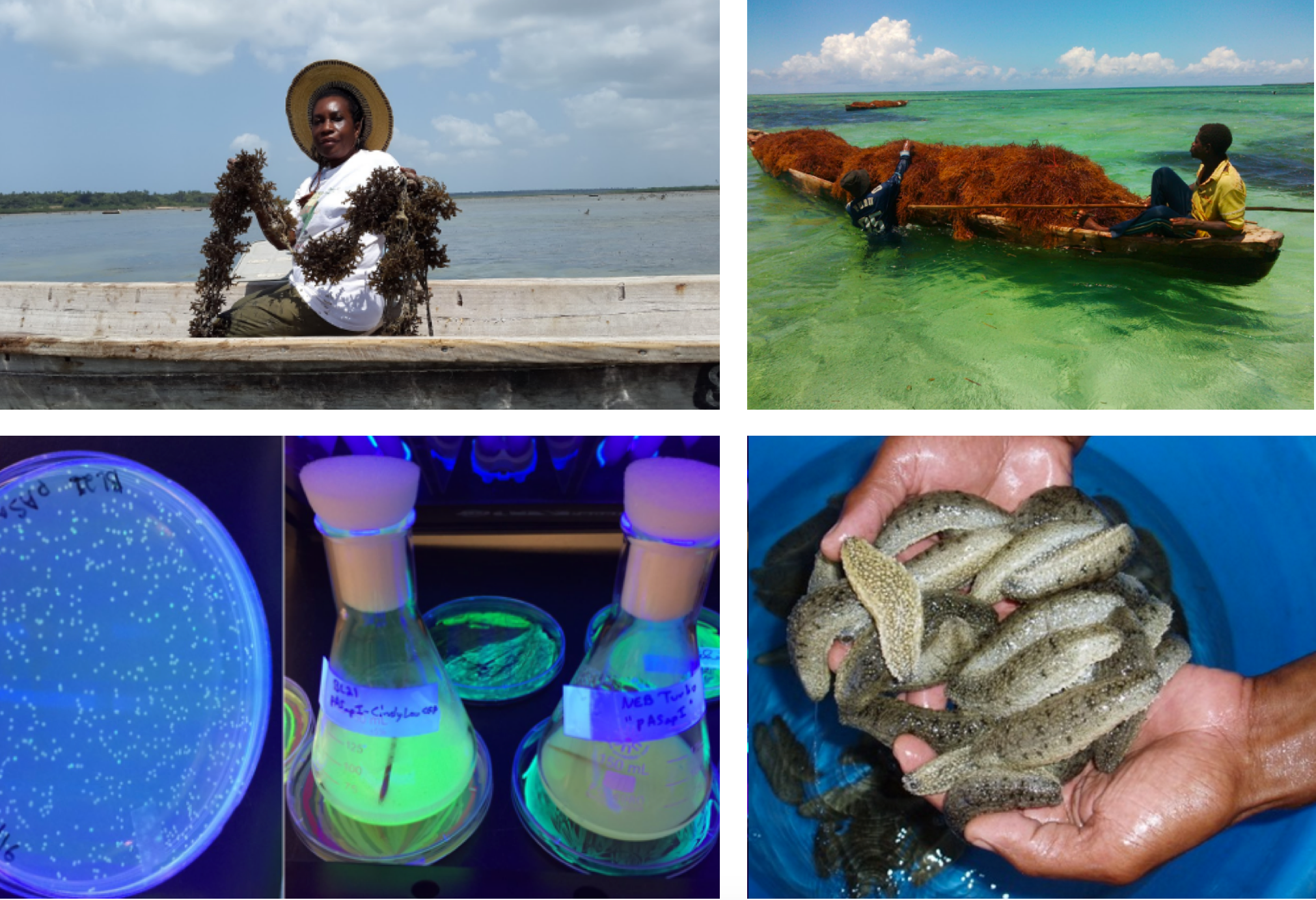 From Sea Cucumbers to Spirulina: Meet the 20 Finalists