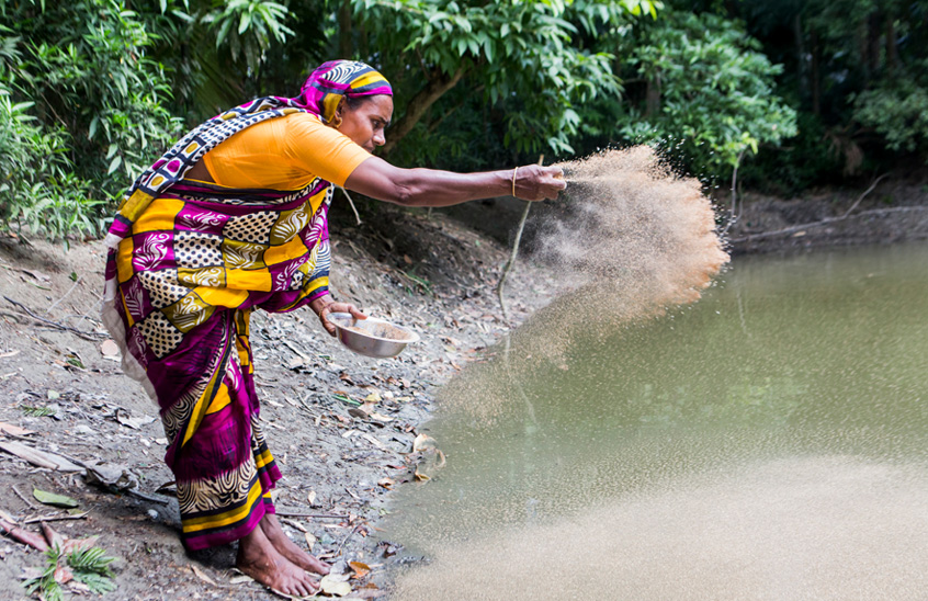 Breakthrough fish feed solution holds promise for smallholders